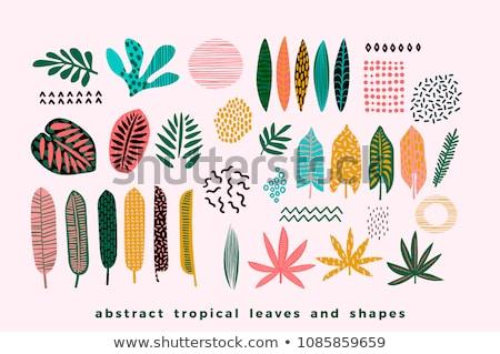 Plemiennych elementy zestaw polinezyjski projekty Pióro Zdjęcia stock © mikemcd