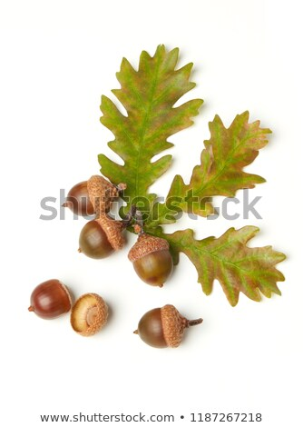 食品 · 自然 · 緑 · 葉 · 秋 · 色 - ストックフォト © dionisvera