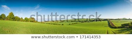 Inglés verde colinas panorámica vista primavera Foto stock © bobbigmac
