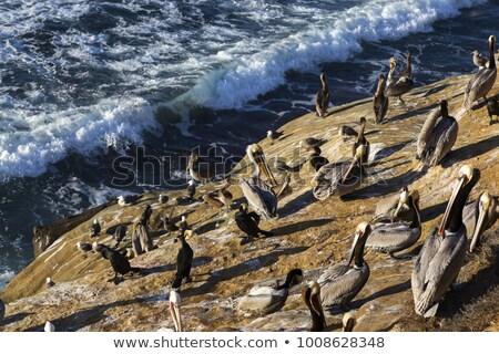 Kuş uçurum deniz plaj bahar Stok fotoğraf © pekour