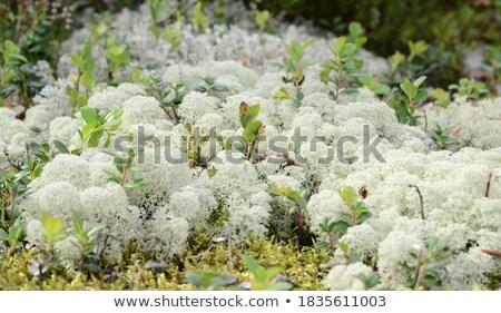 flores · flor · folha · parque · alimentação - foto stock © jaymudaliar
