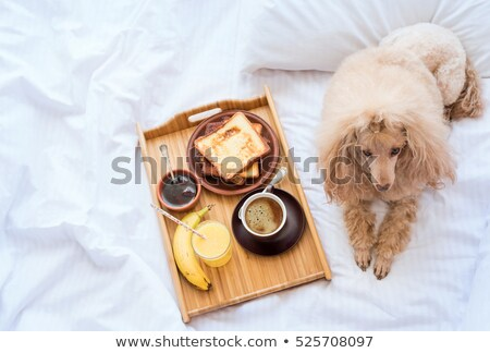 Foto stock: Cão · café · da · manhã · servido · água · marrom