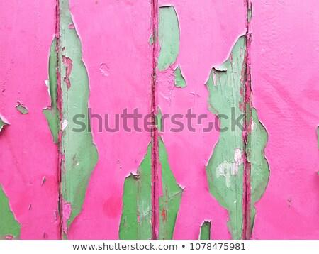 Rosa violeta janela fundo ver isolado Foto stock © vavlt