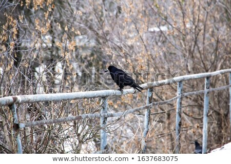 black crow on a metal pillar Stock photo © taviphoto