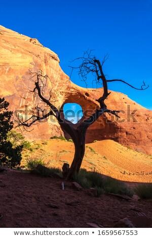 Valle oído árbol primer plano arenisca formación Foto stock © weltreisendertj