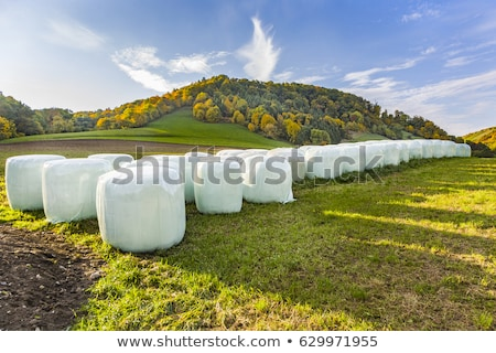bale of straw in automn in intensive colors stock photo © meinzahn