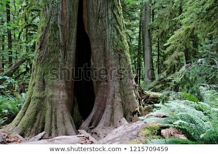 yakacak · odun · orman · Kanada · ağaçlar · halka - stok fotoğraf © imagex