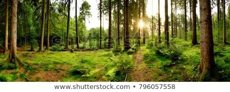 Groene landschap bomen pad bos voorjaar Stockfoto © pab_map