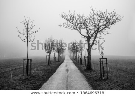 Mysticism. Mystic Alley with Magic Trees in Haze Stock photo © gromovataya