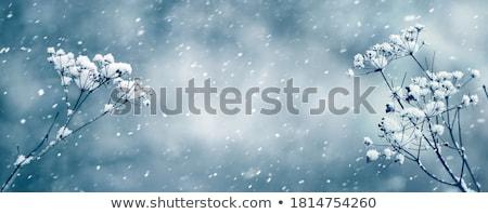 Leaf covered with snow Stock photo © razvanphotos