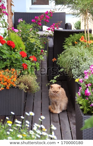 Beautiful modern terrace with mix of summer flowers Stock photo © tannjuska