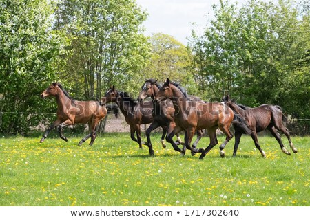 Stallion to pasture Stock photo © Kotenko