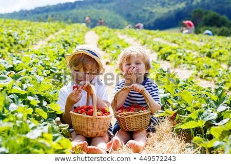 Boldog gyermek aratás mező gyerek búzamező Stock fotó © zurijeta