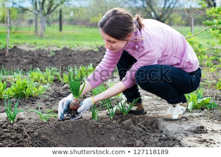 Woman seeding onions in organic vegetable garden Stock photo © stevanovicigor