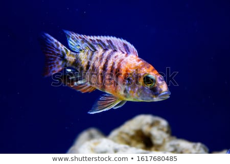 Five colourful fishes Stock photo © bluering