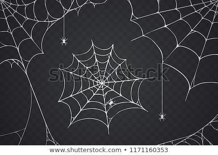 Vad pókháló illusztráció természet háttér művészet Stock fotó © bluering