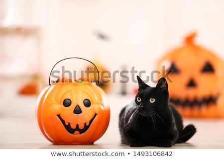 black cat with halloween candy stock photo © adrenalina