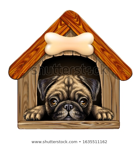 Doghouse Stock photo © bluering