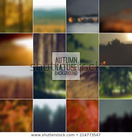 autumn retro set background stock photo © fotoyou