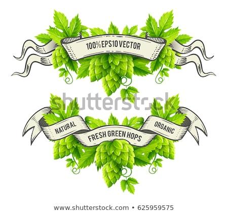 свежие хмель растений зеленые листья вектора изолированный Сток-фото © LoopAll