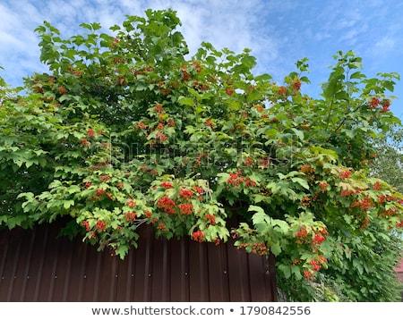 Stockfoto: Bevroren · voedsel · vruchten · ijs · witte