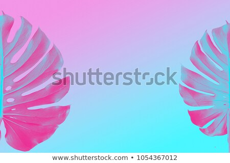 Monstera two leaves as border isolated on ultra violet, pink and blue duotone background Stock photo © artjazz