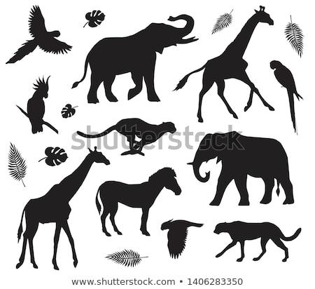 piedi · cat · silhouette · occhi · arte · animali - foto d'archivio © krisdog