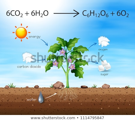 A Process of Tree Produce Oxygen Stock photo © bluering