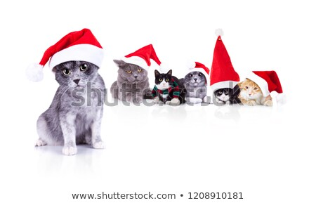six adorable cats wearing santa cap with leader in front stock photo © feedough