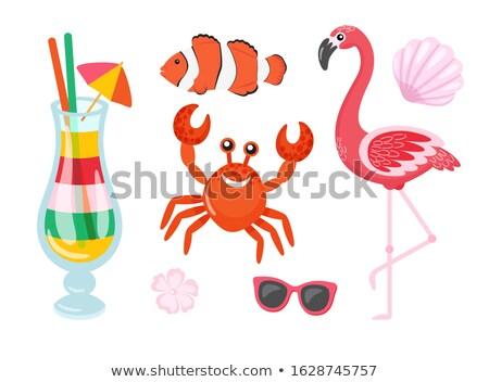 Flamingó rák koktél hal izolált szett Stock fotó © robuart