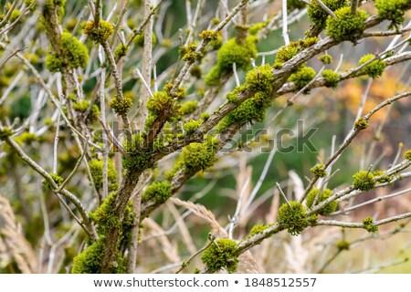 苔 種 自然 デザイン 背景 工場 ストックフォト © grafvision