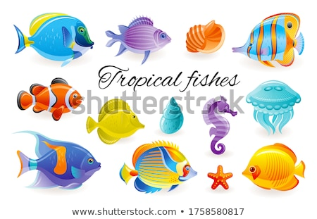 Différent marines animaux eau nature mer Photo stock © olira