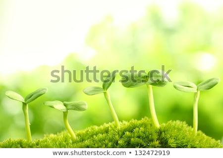 ストックフォト: 新鮮な · 新しい · 葉 · 緑 · 剣