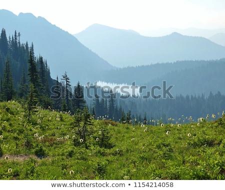 Herbeux parc arbre silhouette montagne lac Photo stock © Frankljr
