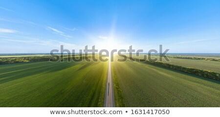 Weide blauwe hemel hemel boom gras Stockfoto © kawing921