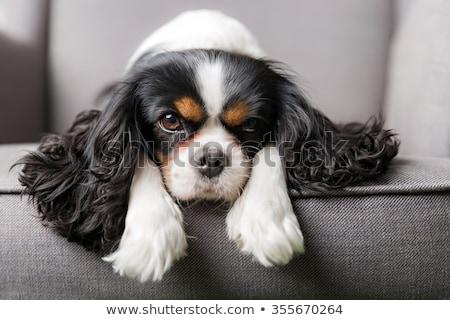 царя · собака · сидят · изолированный · белый · друга - Сток-фото © eriklam