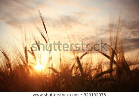 Zonnestralen zon natuur achtergrond schoonheid Stockfoto © Melpomene
