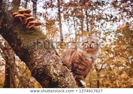 gato · árvore · outono · belo · gatinho · sessão - foto stock © natalinka