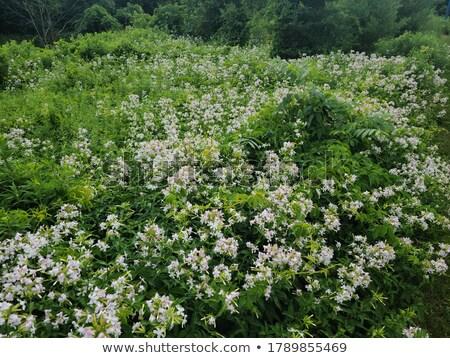 Fleur conservation mise au point sélective Lily Photo stock © Gordo25