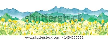 spring summer background   rape wild with blue sky stock photo © dmitry_rukhlenko