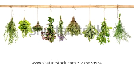Fresh herbs hanging isolated on white background stock photo © Kesu