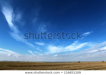 dark clouds and blue sky over fields stock photo © meinzahn