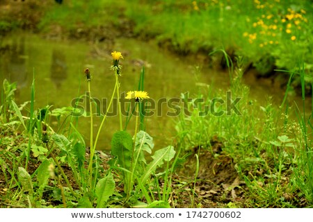 Bunch of spring flower next to the forest Stock photo © Anettphoto
