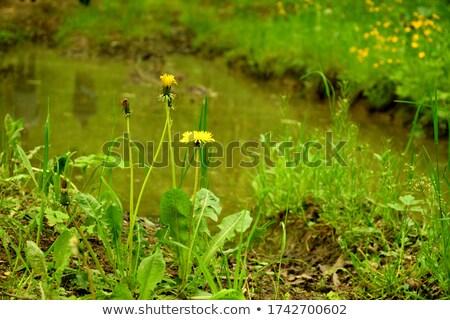 Köteg tavaszi virág erdő gyönyörű virág víz Stock fotó © Anettphoto
