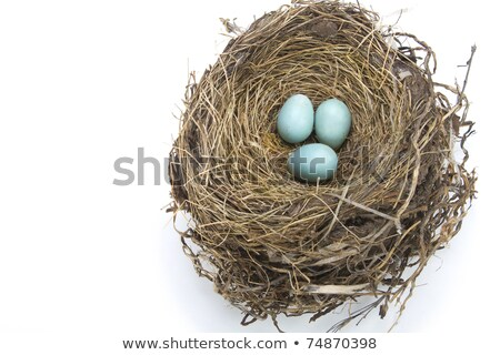 卵 鳥の巣 自然光 自然 健康 鳥 ストックフォト © nuiiko