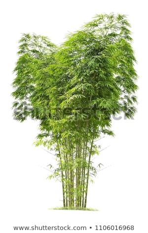 bamboo tree stock photo © nejron