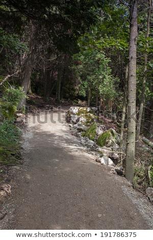 тропе лес Онтарио Канада природы тень Сток-фото © bmonteny