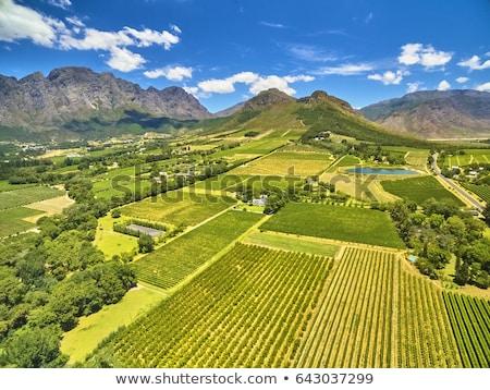 szőlőskert · Dél-Afrika · gyönyörű · külváros · Fokváros · égbolt - stock fotó © vividrange