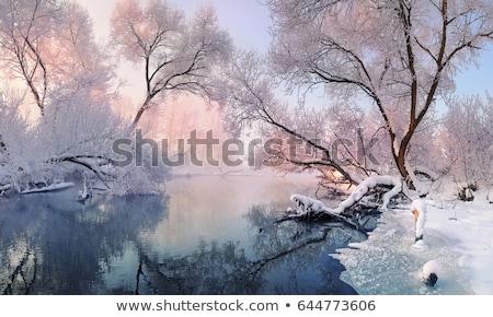 inverno · paisagem · árvores · coberto · lago · congelada - foto stock © alisluch
