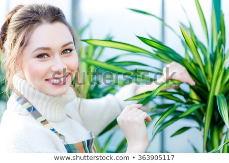 pretty woman gardener taking care of ficus in flower pot stock photo © deandrobot